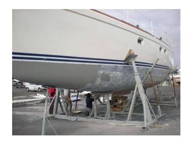oceancat-42134040170451565355695168674570.jpg Foto 0